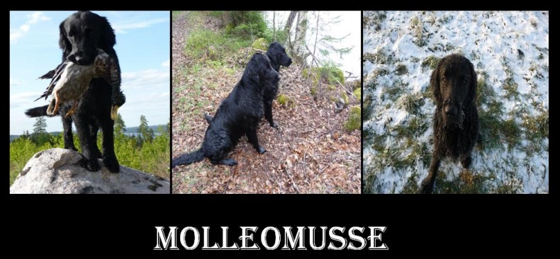 molleomussemilan